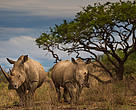 Started by WWF-SA in 2010, World Rhino Day was initiated to draw attention to SA's rhinos as the poaching threat emerged.