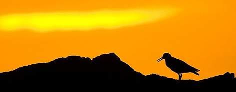 / ©: Peter Chadwick / WWF-SA