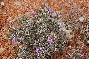 Succulent Karoo Climate
