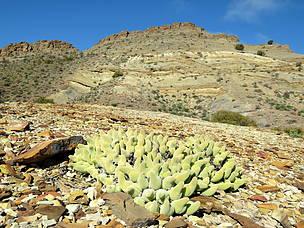 Succulent Karoo veld near Anysberg Nature Reserve.