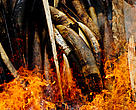 Gabon's seized Ivory goes up in smoke beckoning in a new era in the country's commitment to put an end to poaching and other wild life crimes.