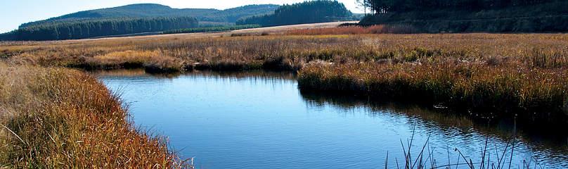 © WWF Mondi Wetlands Programme