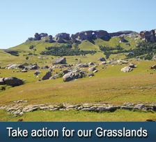 Freestate Grasslands