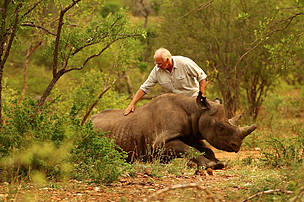 Dr Jacques Flamand of WWF's Black Rhino Range Expansion Project administers the antidote to wake up a black rhino which has just been released on to a new home after an epic 1500 kilometre journey.
