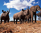 Wildlife crime not only poses a threat to animals, but is a risk to people, territorial integrity, stability and rule of law.