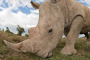 Rhino poaching has increased by more than 3 000% in the past five years.