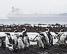 South Africa has seen its fair share of shipping accidents. Robben and Dassen Islands, which are key breeding colonies for birds, are particularly vulnerable.