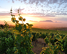 Over 10 years, nearly 90% of wine producers in the South African wine industry have firmly embedded responsible environmental practices into their business.