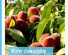 Water Stewardship Experiences in the Western Cape